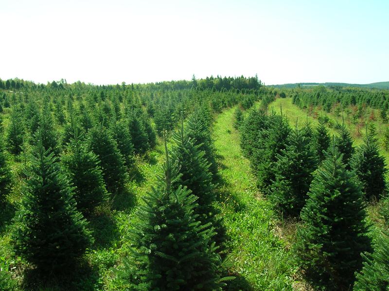 Perry's Tree Farm